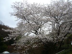 0330枡形山- 056浅間神社.png