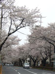 0402国立- 003矢川.png