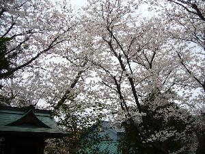 0330枡形山- 0583浅間神社.png