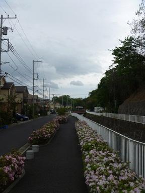 0501 よこやまの道 (77)s.jpg
