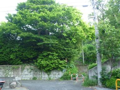 0520 南側トレイル (11)s.jpg
