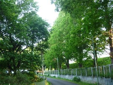 0520 南側トレイル (9)s.jpg